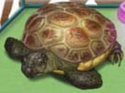 Kaplumbagalar Pak Yap